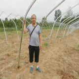 供应北京日光温室大棚造价,北京日光温室大棚造价公司图片