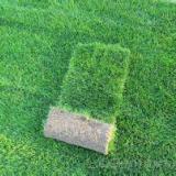 内蒙古草坪种植基地  内蒙古草坪种植 内蒙古草坪基地