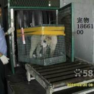 空运宠物出国图片