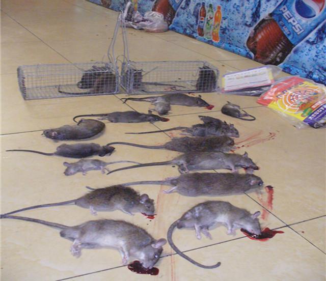 供应【灭鼠公司】罗江灭鼠公司、中江灭鼠公司、德阳灭鼠公司