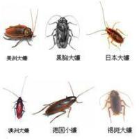彭州家庭灭鼠公司