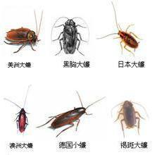 供应装修预防白蚁、装修白蚁防治、都江堰白蚁防治公司