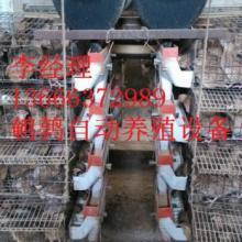 供应鹌鹑养殖笼生产厂家,鹌鹑养殖笼供应商,鹌鹑养殖笼批发价格批发