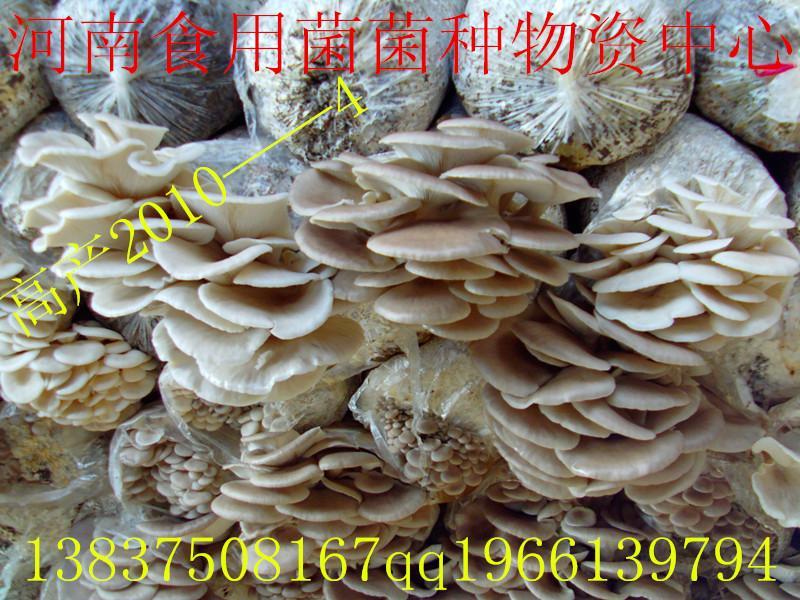 供应食用菌平菇菌种2010——4一级母种食用菌平菇菌种20104
