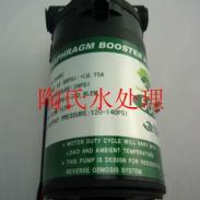 50G柏繁泵/纯水机水泵/增压泵图片