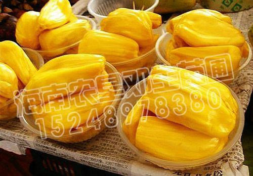 供应海南树菠萝