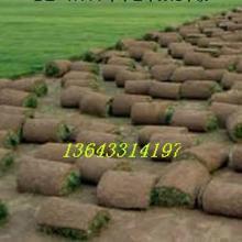 供应草坪卷/草坪价格批发