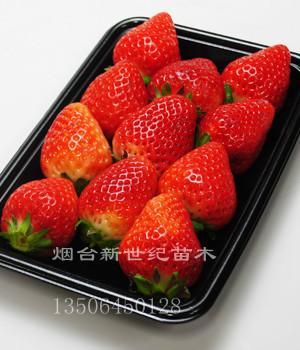 供应湖南长沙佐贺2号草莓苗,最新佐贺清香草莓苗,草莓新品种