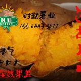 供应沈阳烤红薯批发,沈阳电烤红薯直销,沈阳烟薯25批发,