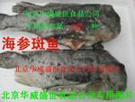 海参斑鱼图片