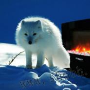 KTV壁炉小狐仙图片