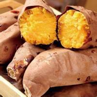 山东烟薯25批发 山东烟薯25大量批发 山东烟薯批发价格