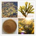 供应墨角藻提取物 墨角藻多糖 纯天然植物提取物 厂家大量现货