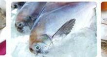 供应国际渔业博览会