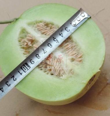 薄皮甜瓜种子图片/薄皮甜瓜种子样板图 (1)
