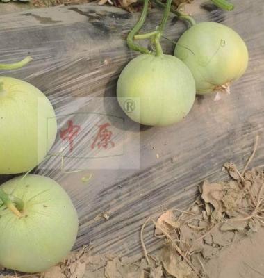 薄皮甜瓜种子图片/薄皮甜瓜种子样板图 (4)