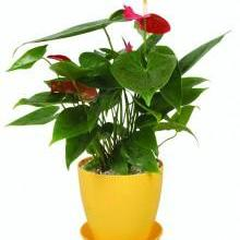 供应东莞厚吸塑厂家提供花盆定制图片