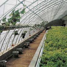 温室大棚建造,使用寿命长,老牌企业。 河北鑫仁聚圣农业开发有限温室大棚