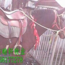 供应一匹马多少钱图片