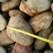 石家庄鹅卵石图片