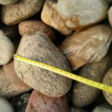 供应石家庄鹅卵石,石家庄变压器鹅卵石