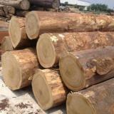 供应上海南美进口柚木批发/柚木木材供货商