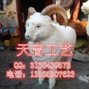 仿真绵羊模型民间绵羊皮毛动物标本图片