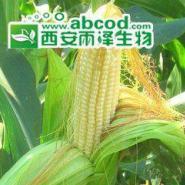 玉米须提取物图片