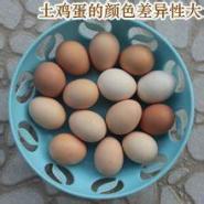 河北邯郸土鸡蛋批发销售图片
