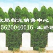 天津植树葬多少钱图片