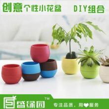 供应创意多肉小花盆,时尚植物花盆,桌面防辐射绿植花盆,环保PP树脂塑料图片