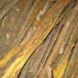 供应用于清热燥湿黄柏提取物