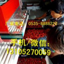 供应山东樱桃分级机型号XGJ-YT自动分选樱桃大小图片
