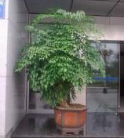 高新区写字楼办公楼植物租赁服务