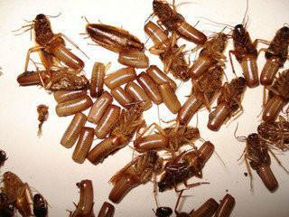 供应开封灭蟑螂最彻底的公司
