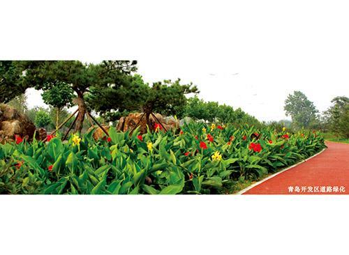 绿化工程价格:【荐】优质绿化工程绿化工程嶤