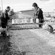 供应常年低价出售草帘子,广东草帘子,台湾防汛草袋
