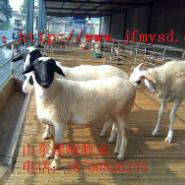 波尔山羊商品羊价格图片