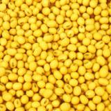 求购玉米,大豆,小麦