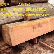 湘潭山樟木代理商图片