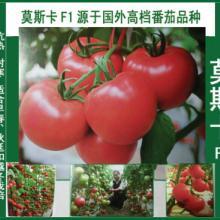 供应莫斯卡F1粉果番茄抗热耐寒