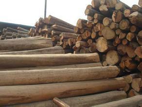 上海木材进口代理报关图片/上海木材进口代理报关样板图 (4)