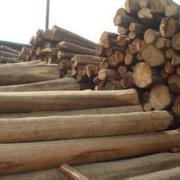 进口美国木材上海报关报检